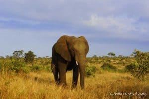 Weltreise 1 jahr elefant