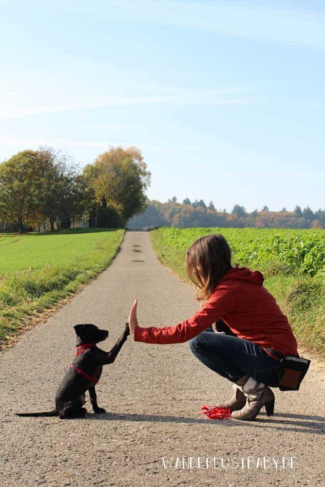 Frau und Hund machen High-Five