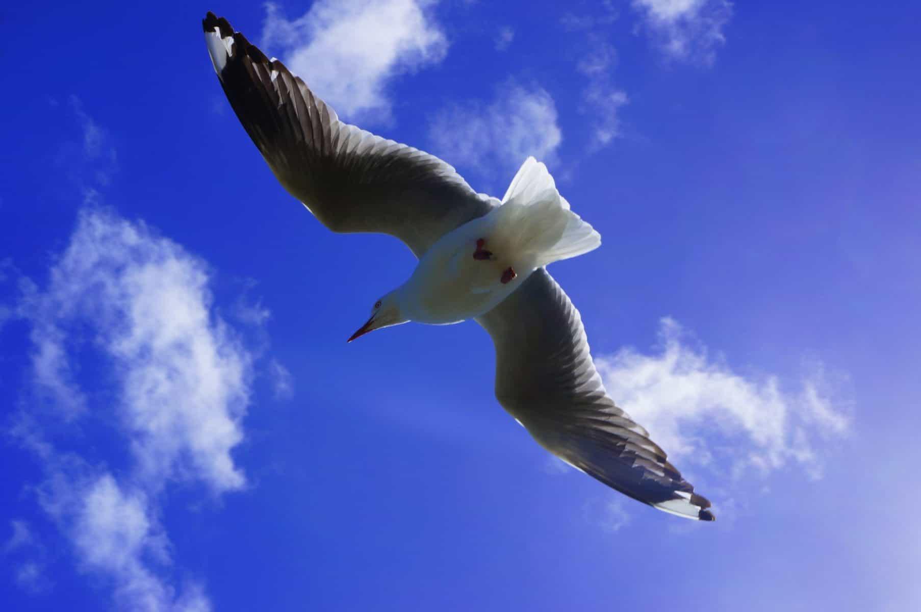 Vogel fliegt in der Luft