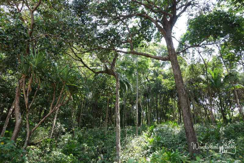 Lam Ru Nationalpark