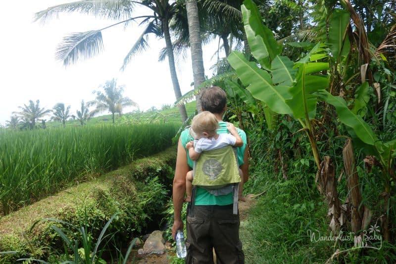 Mann mit Kind in Reisfeldern
