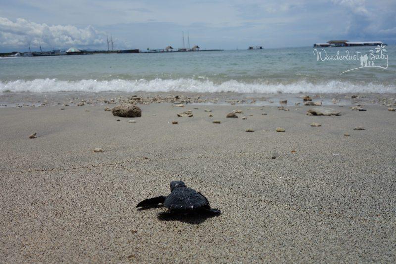 Schildkrötenbaby am Strand