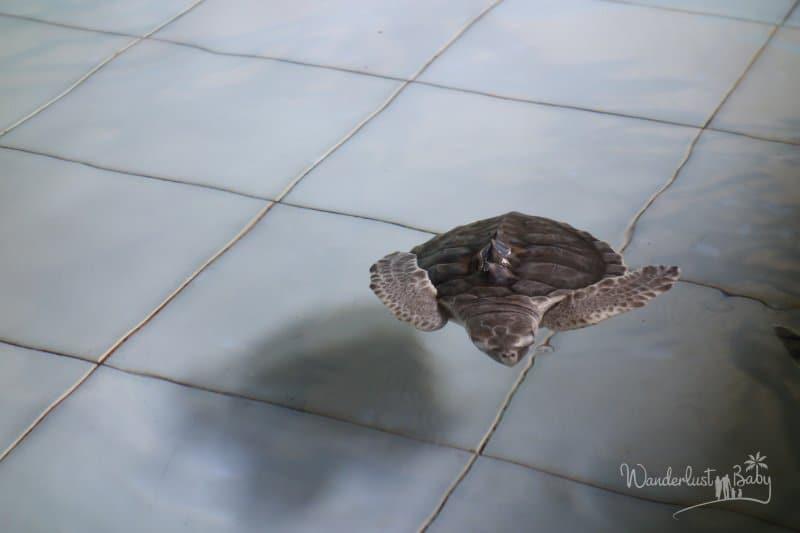 Schildkröte im Becken
