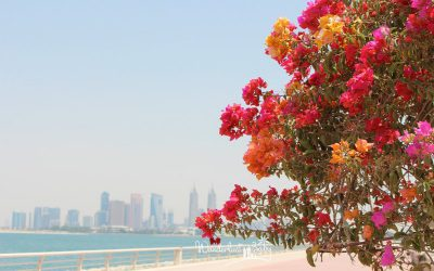 Dubai mit Kleinkind – Lohnt es sich?