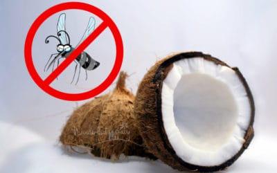 Kokosöl gegen Mücken: Unser natürlicher Mückenschutz