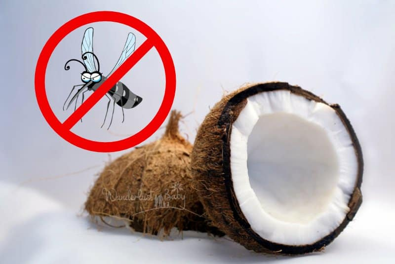 Kokosoel gegen Muecken natuerlicher Mueckenschutz