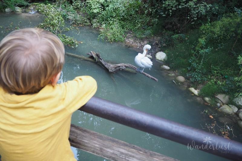 Gardasee Parco Natura Viva