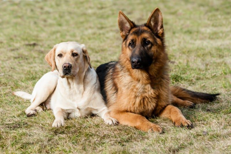 Hunde Arthrose
