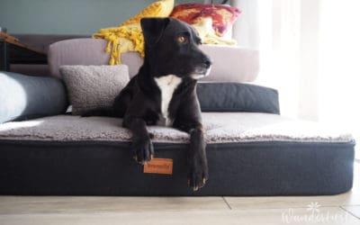 Orthopädisches Hundebett – nur das Beste für den Vierbeiner!