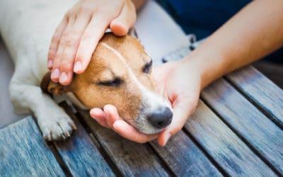 Arthrose beim Hund – diese Nahrungsergänzungsmittel können helfen!